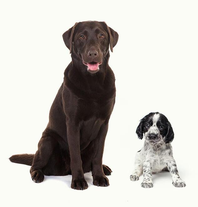 cani-sciolti-cucciolo