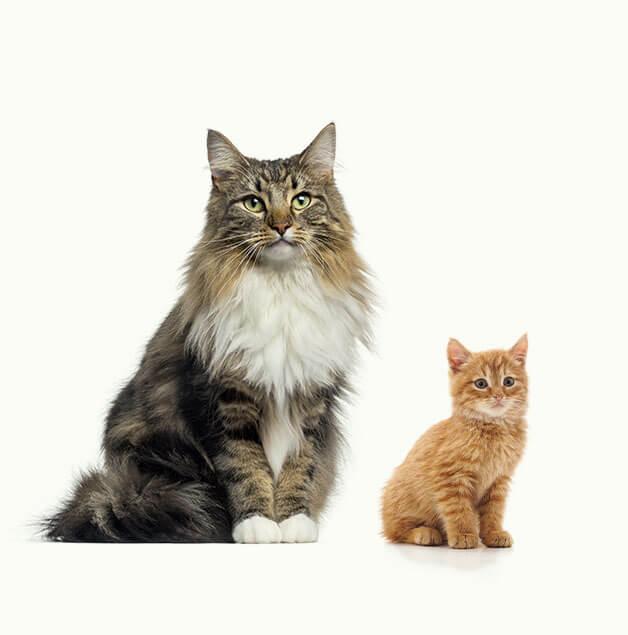 gatti-sciolti-cucciolo