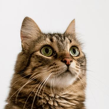 linea-alimenti-naturali-gatti